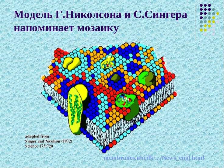 Модель Г.Николсона и С.Сингера напоминает мозаику membranes.nbi.dk/.../News_e...