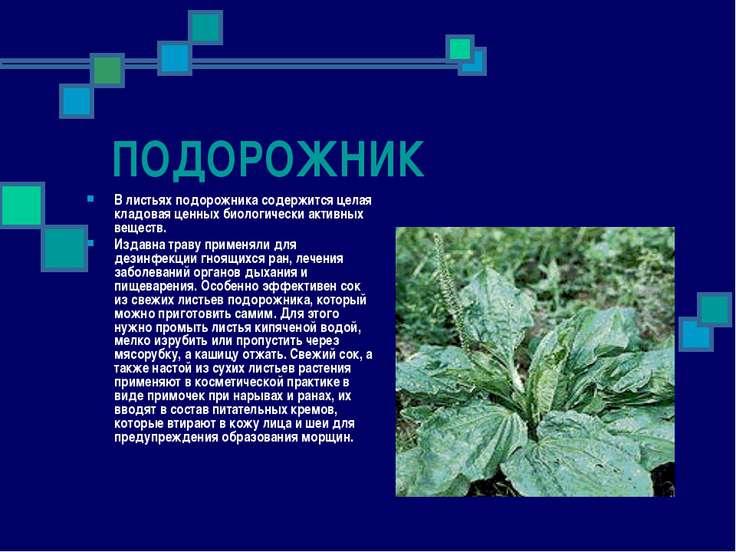 ПОДОРОЖНИК В листьях подорожника содержится целая кладовая ценных биологическ...