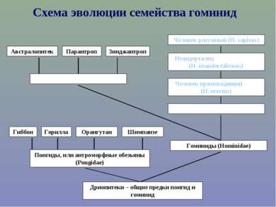 Схема эволюции семейства гоминид Дриопитеки – общие предки понгид и гоминид П...