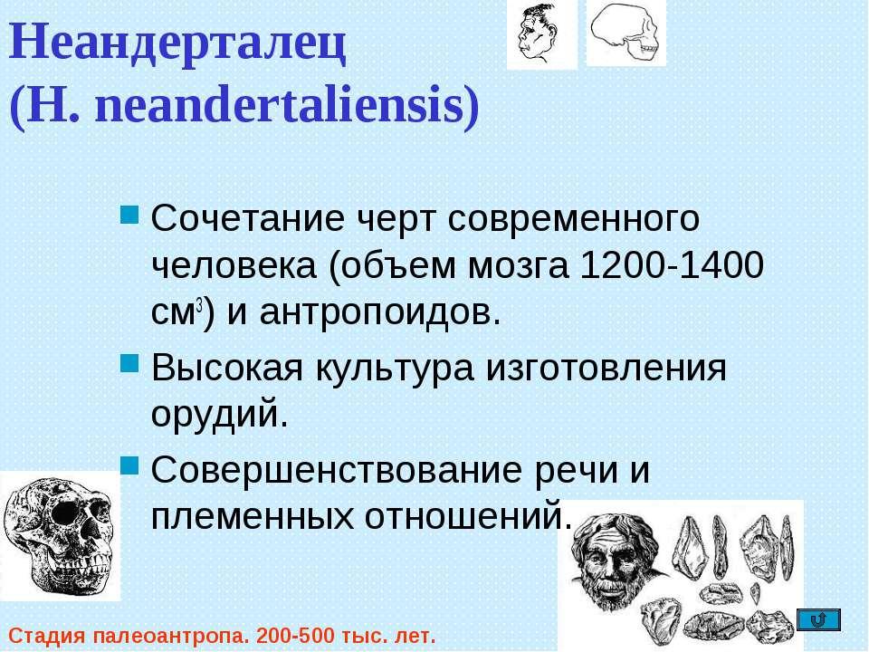Неандерталец (H. neandertaliensis) Сочетание черт современного человека (объе...