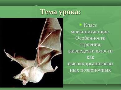 Тема урока: Класс млекопитающие. Особенности строения, жизнедеятельности как ...