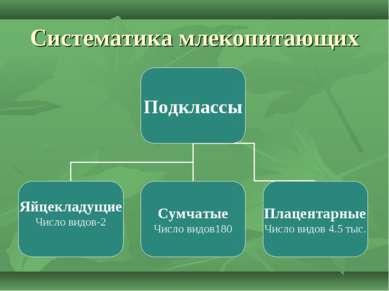 Систематика млекопитающих