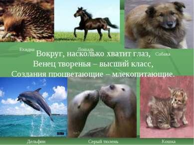 Ехидна Лошадь Дельфин Серый тюлень Собака Кошка Вокруг, насколько хватит глаз...