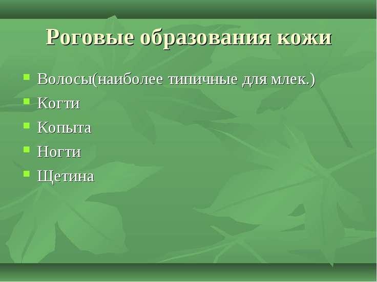 Роговые образования кожи Волосы(наиболее типичные для млек.) Когти Копыта Ног...