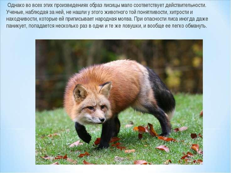 Однако во всех этих произведениях образ лисицы мало соответствует действитель...