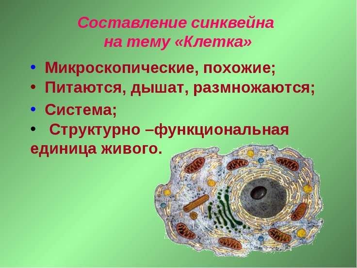 Микроскопические, похожие; Питаются, дышат, размножаются; Структурно –функцио...