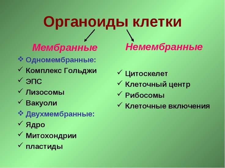 Органоиды клетки Мембранные Одномембранные: Комплекс Гольджи ЭПС Лизосомы Вак...