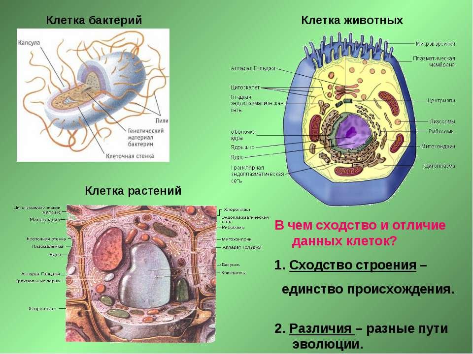 Клетка бактерий Клетка растений Клетка животных В чем сходство и отличие данн...