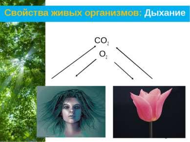 Свойства живых организмов: Дыхание CO2 O2 Free Powerpoint Templates Page *