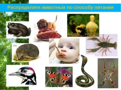 Распределите животных по способу питания Free Powerpoint Templates Page *