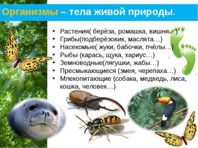 Организмы – тела живой природы. Растения( берёза, ромашка, вишня…) Грибы(подб...