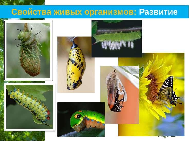 Свойства живых организмов: Развитие Free Powerpoint Templates Page *