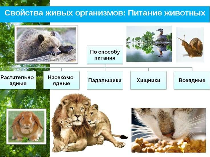 Свойства живых организмов: Питание животных Free Powerpoint Templates Page *
