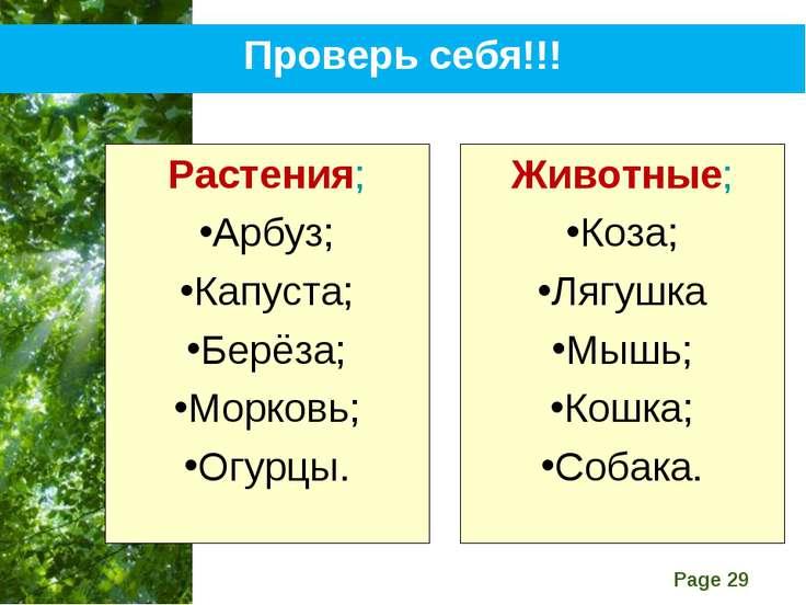 Проверь себя!!! Растения; Арбуз; Капуста; Берёза; Морковь; Огурцы. Животные; ...