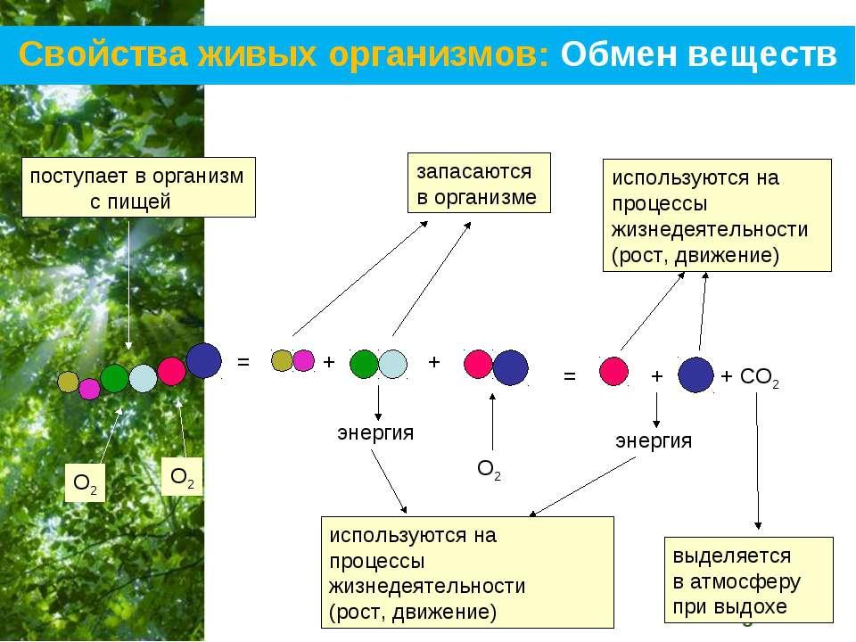 Свойства живых организмов: Обмен веществ = + + + = энергия + СО2 энергия О2 О...