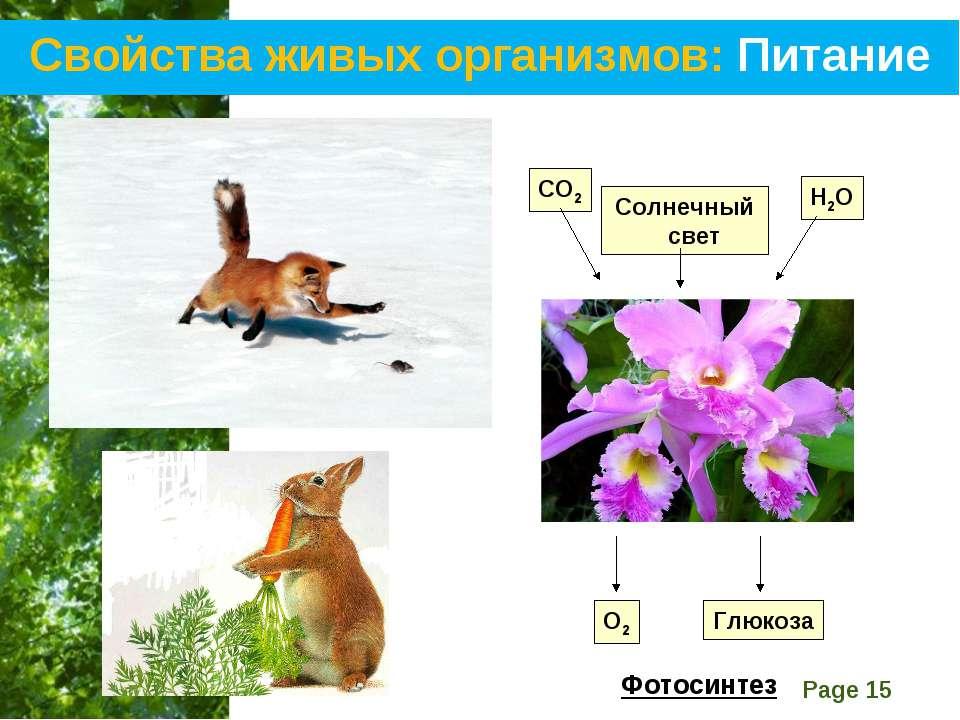 Свойства живых организмов: Питание СО2 Солнечный свет Н2О О2 Глюкоза Фотосинт...