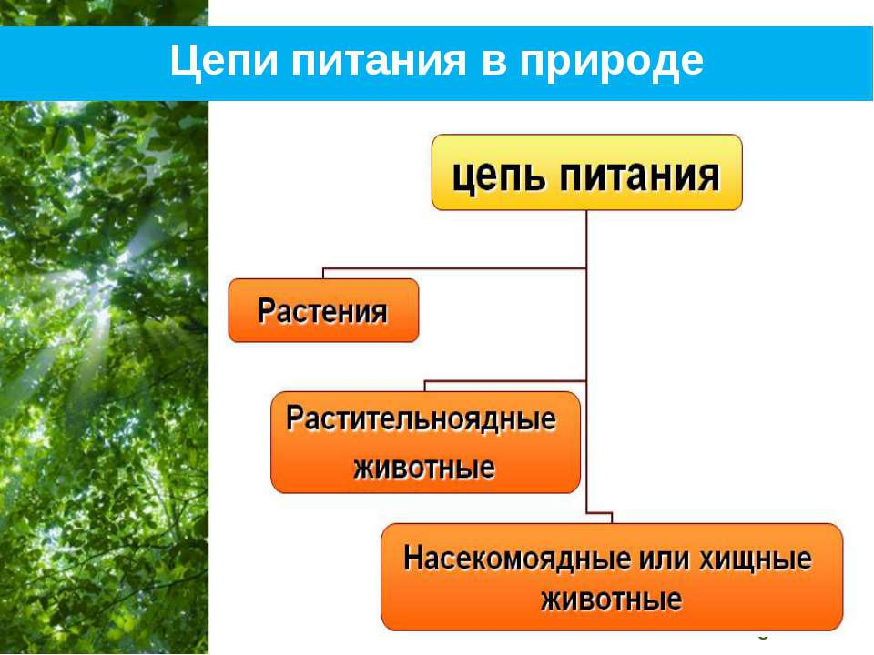Цепи питания в природе Free Powerpoint Templates Page *