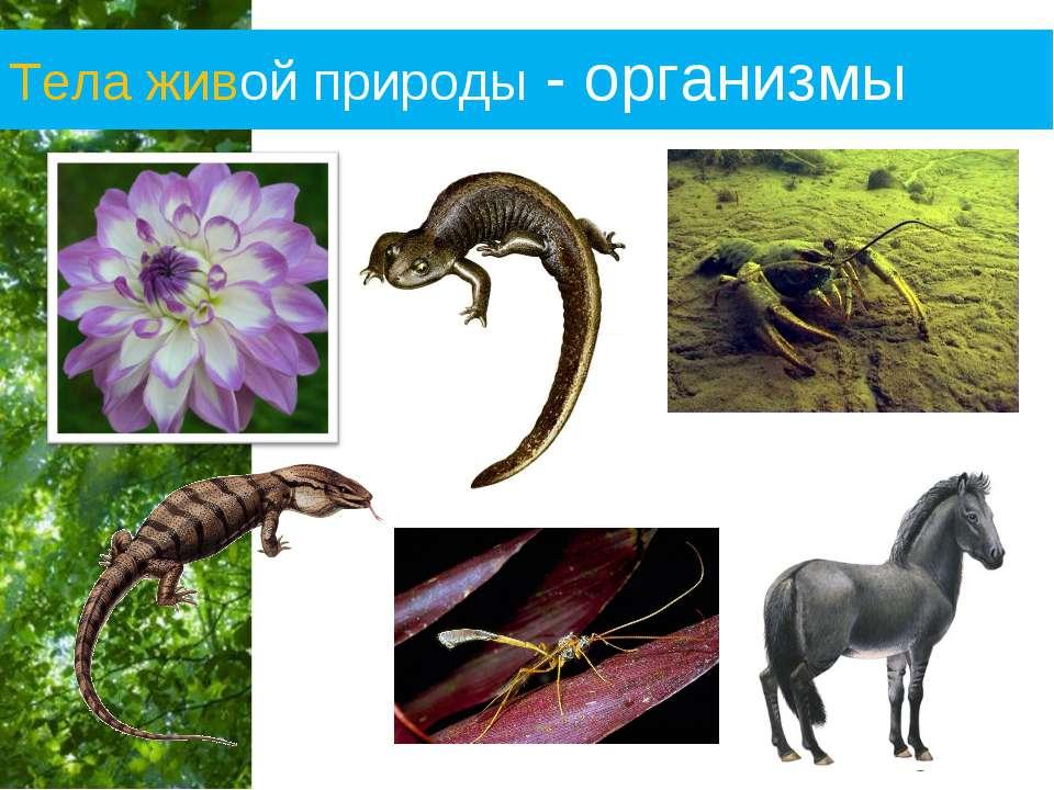 Тела живой природы - организмы Free Powerpoint Templates Page *