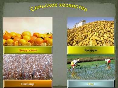 Пшеница Цитрусовые Рис Кукуруза