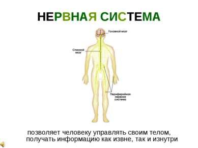 НЕРВНАЯ СИСТЕМА позволяет человеку управлять своим телом, получать информацию...