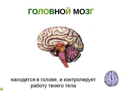 ГОЛОВНОЙ МОЗГ находится в голове, и контролирует работу твоего тела