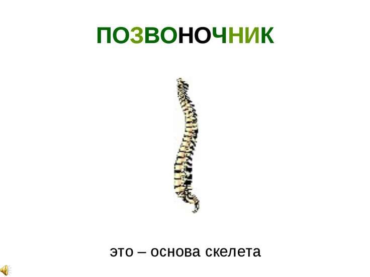 ПОЗВОНОЧНИК это – основа скелета