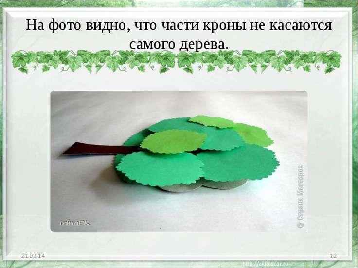 На фото видно, что части кроны не касаются самого дерева. * *