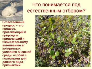 Что понимается под естественным отбором? Естественный процесс – это процесс, ...