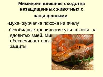 Мимикрия внешнее сходства незащищенных животных с защищенными -муха- журчалка...