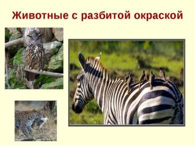 Животные с разбитой окраской