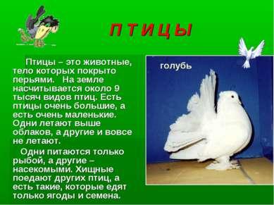 П Т И Ц Ы Птицы – это животные, тело которых покрыто перьями. На земле насчит...