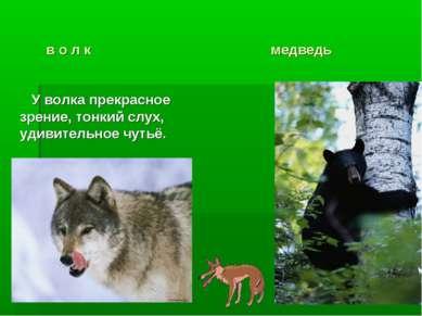 в о л к медведь У волка прекрасное зрение, тонкий слух, удивительное чутьё.