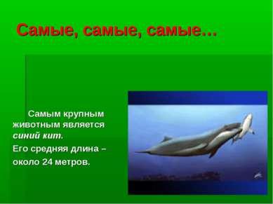 Самые, самые, самые… Самым крупным животным является синий кит. Его средняя д...