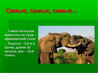 Самые, самые, самые… Самое большое животное на суше – африканский слон: Высот...