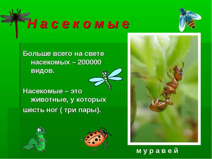 Н а с е к о м ы е Больше всего на свете насекомых – 200000 видов. Насекомые –...