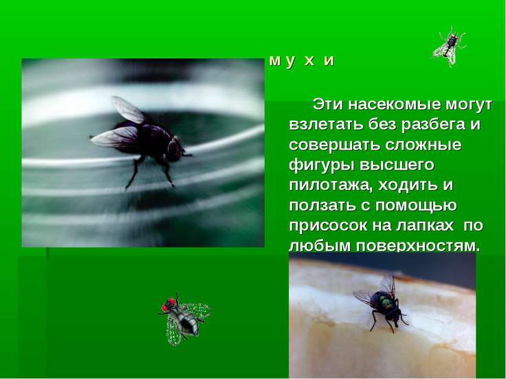м у х и Эти насекомые могут взлетать без разбега и совершать сложные фигуры в...