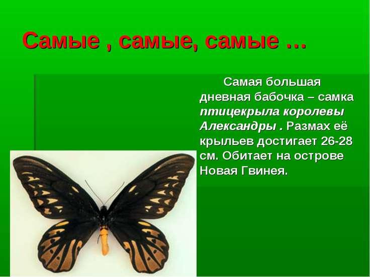 Самые , самые, самые … Самая большая дневная бабочка – самка птицекрыла корол...
