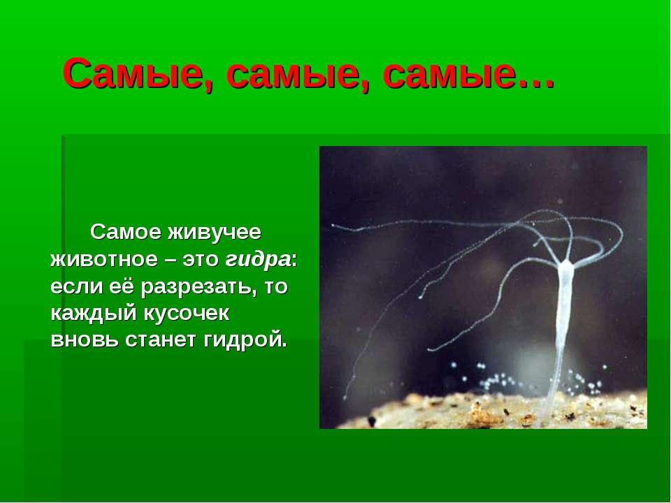 Самые, самые, самые… Самое живучее животное – это гидра: если её разрезать, т...