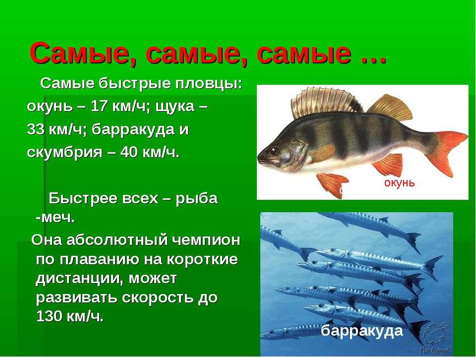 Самые, самые, самые … Самые быстрые пловцы: окунь – 17 км/ч; щука – 33 км/ч; ...