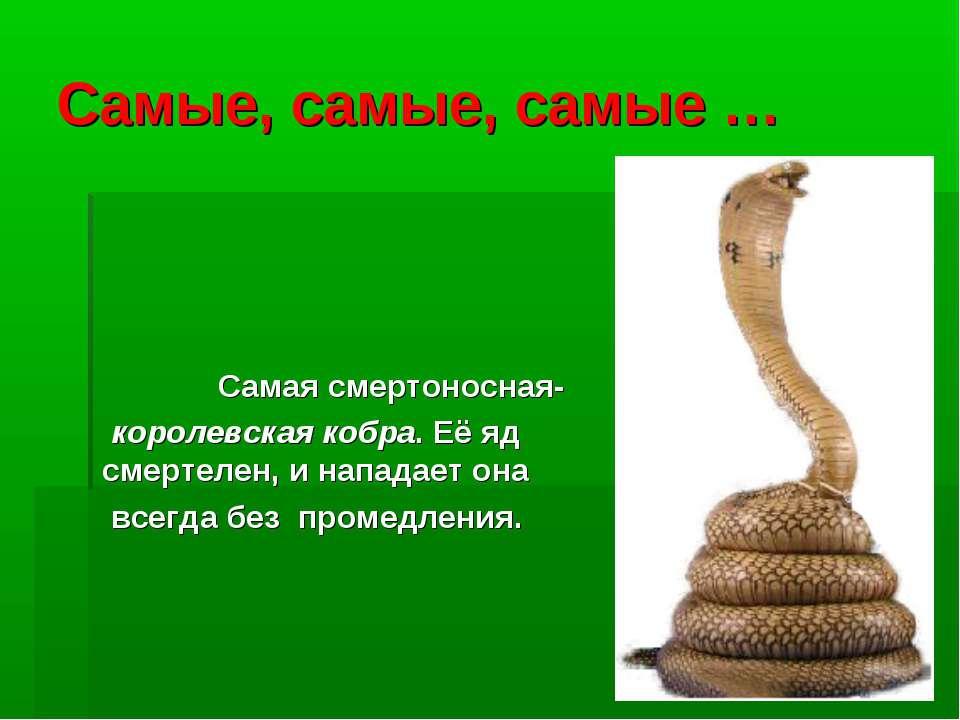 Самые, самые, самые … Самая смертоносная- королевская кобра. Её яд смертелен,...