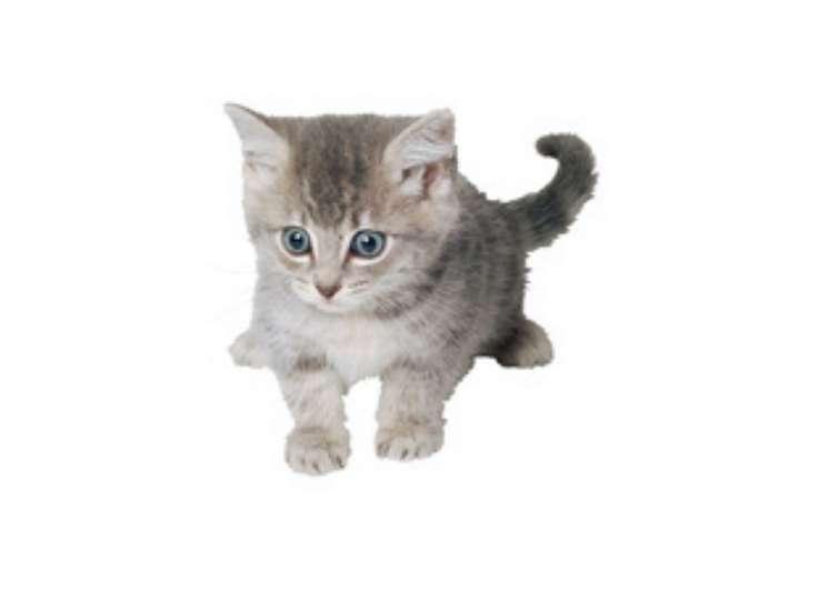 …голодный котенок мяукает