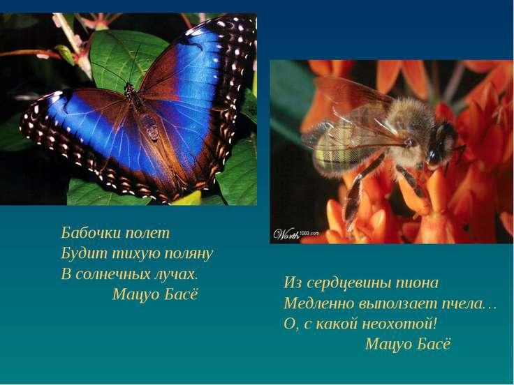 Бабочки полет Будит тихую поляну В солнечных лучах. Мацуо Басё Из сердцевины ...