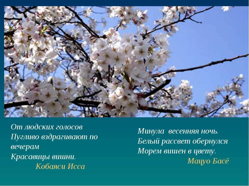 Минула весенняя ночь. Белый рассвет обернулся Морем вишен в цвету. Мацуо Басё...