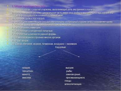 1. Общая характеристика типа: 1) Наличие хорды – упругий стержень, выполняющи...