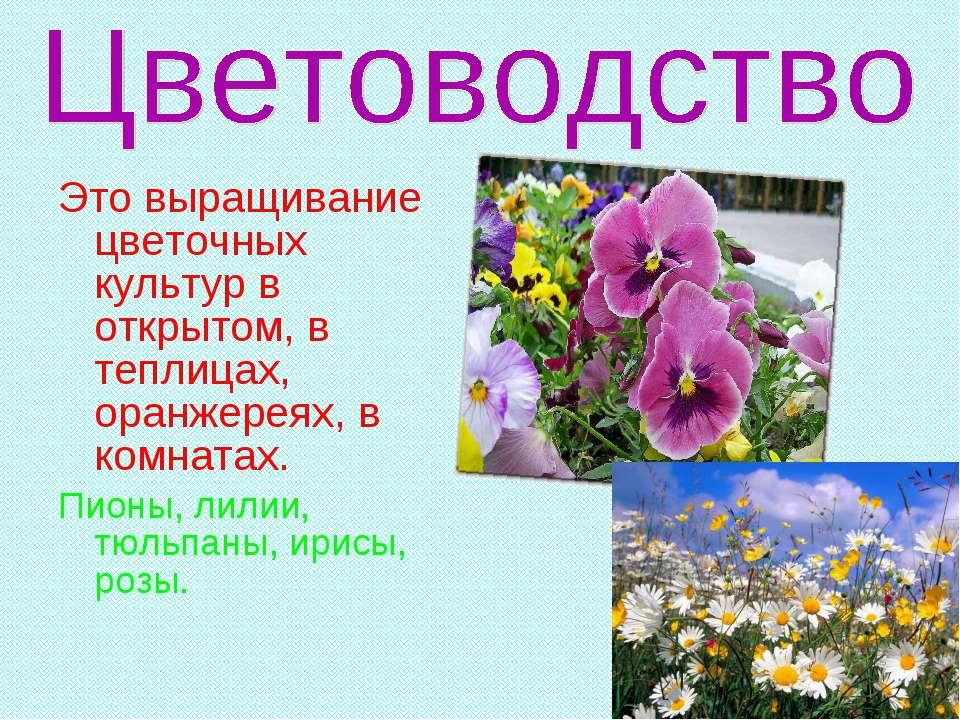 Это выращивание цветочных культур в открытом, в теплицах, оранжереях, в комна...