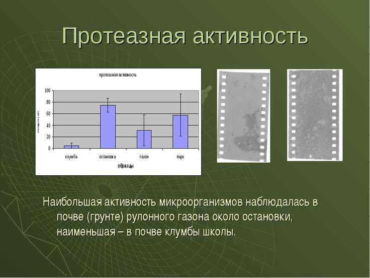 Протеазная активность Наибольшая активность микроорганизмов наблюдалась в поч...