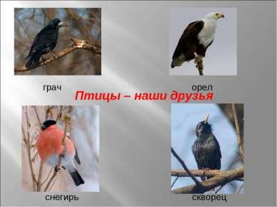 Птицы – наши друзья снегирь скворец грач орел