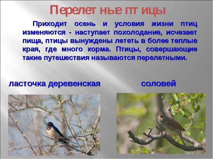 Приходит осень и условия жизни птиц изменяются - наступает похолодание, исчез...