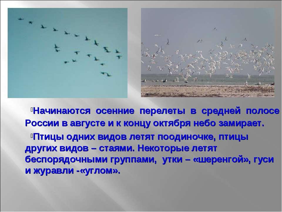 Начинаются осенние перелеты в средней полосе России в августе и к концу октяб...