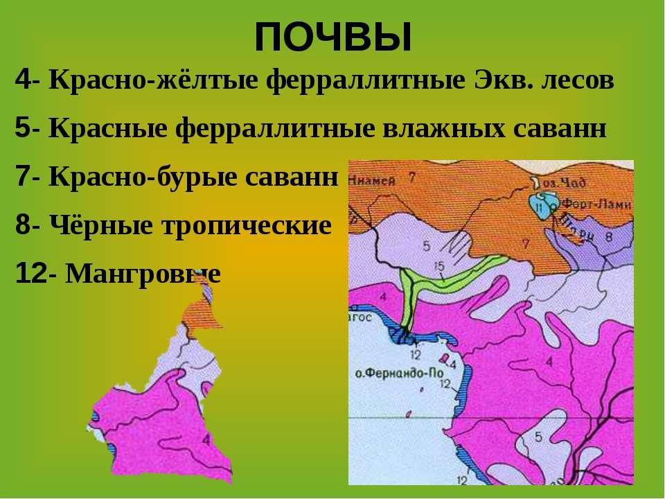 ПОЧВЫ 4- Красно-жёлтые ферраллитные Экв. лесов 5- Красные ферраллитные влажны...